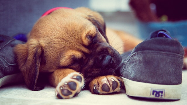 Setting Your New Pet Off on the Right Paw